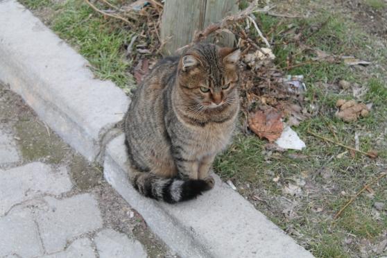 gato 12