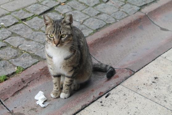 gato 13