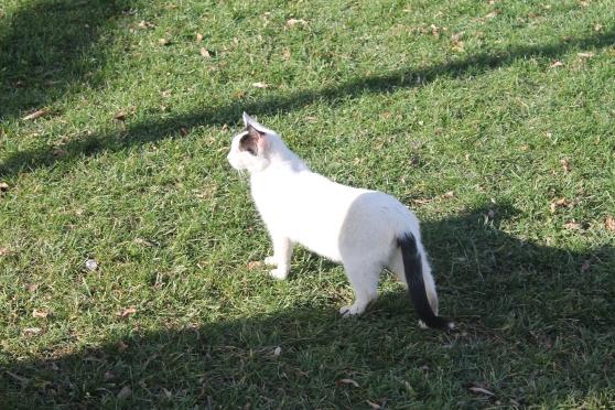 gato 15