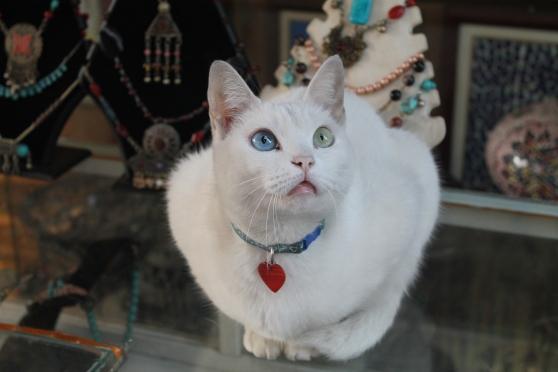 gato 24