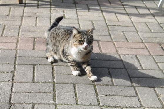 gato 32