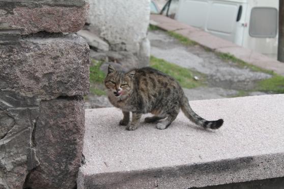 gato 35
