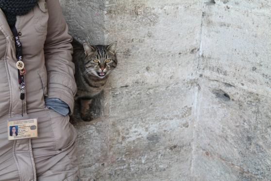 gato 43