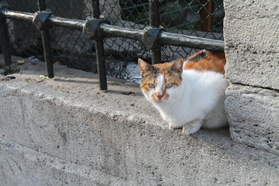 gato 45