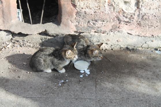 gatos 36