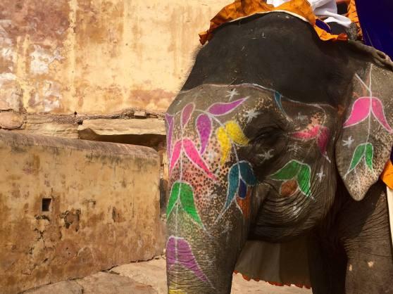 Elefante Amer Fort