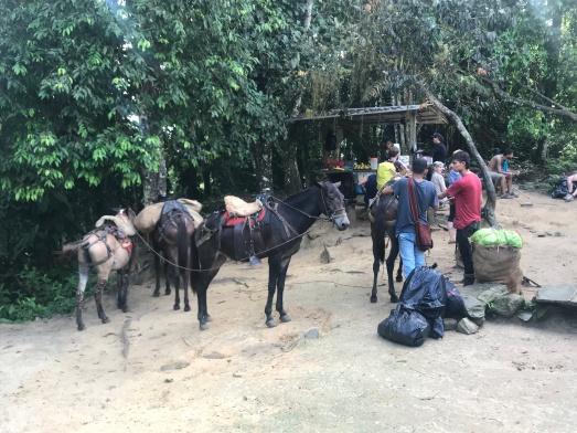 mulas de carga